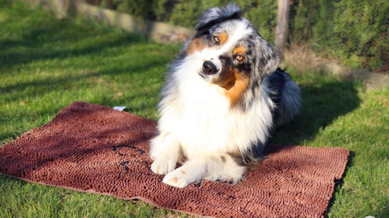 Rohožka Dirty Dog