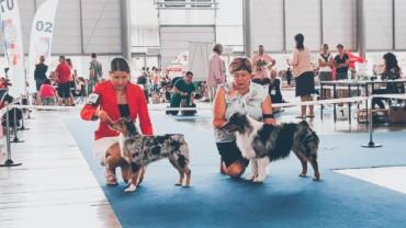 Minnie nový Český Junior Šampion, Intercanis 2019