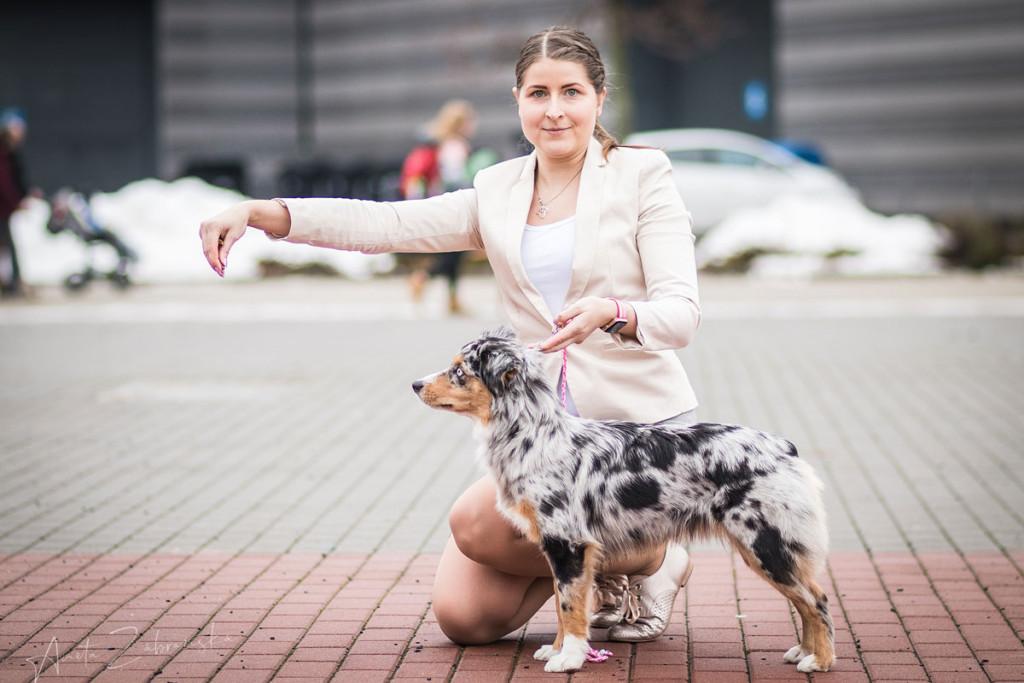 Minnie miniaturní americký ovčák v postoji s majitelkou